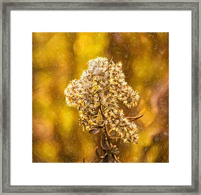 Autumn Goldenrod And A Poser - Paint Framed Print