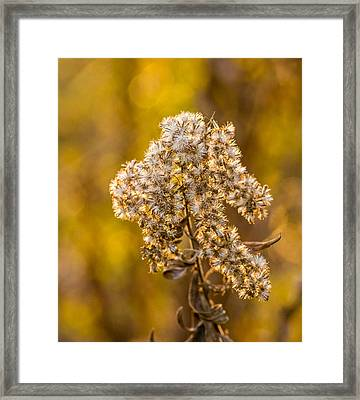 Autumn Goldenrod And A Poser Framed Print
