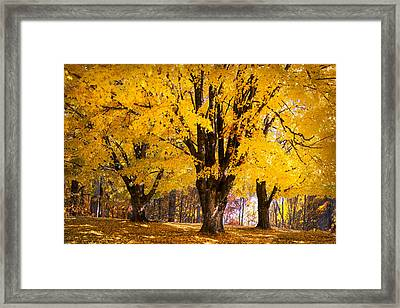 Autumn Golds Framed Print by Debra and Dave Vanderlaan