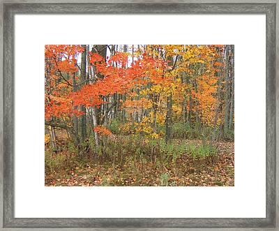 Autumn Golds Framed Print by Margaret McDermott