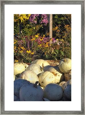 Autumn Gourds Framed Print by Joann Vitali