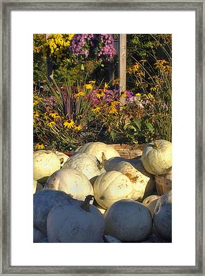Autumn Gourds Framed Print