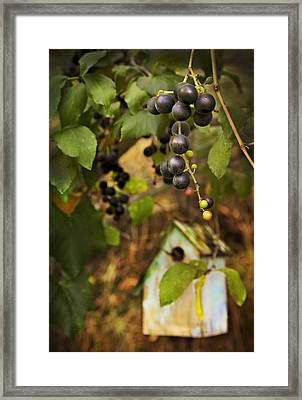 Autumn Grapes With Birdhouse Framed Print by Theresa Tahara