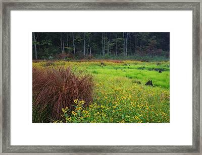 Autumn Grass Framed Print by Bill Wakeley