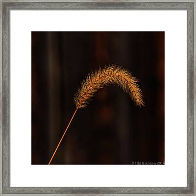 Autumn Grass Framed Print by Kathi Isserman