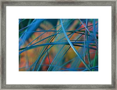 Autumn Grass Framed Print by Rebeka Dove