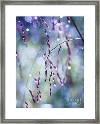 Autumn Grasses Framed Print by Amy Porter