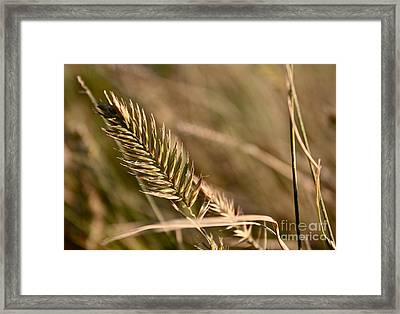 Autumn Grasses Framed Print