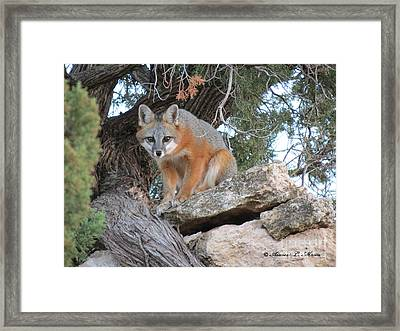 Silent Watcher Framed Print by Aimee Mouw