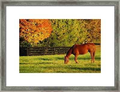 Autumn Grazing Framed Print by James Kirkikis