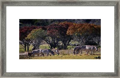Autumn Grazing Framed Print by Joan Carroll