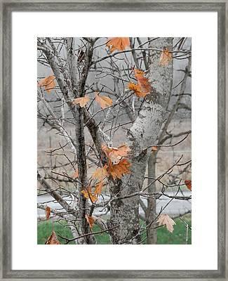Autumn Grey Framed Print by Margaret McDermott