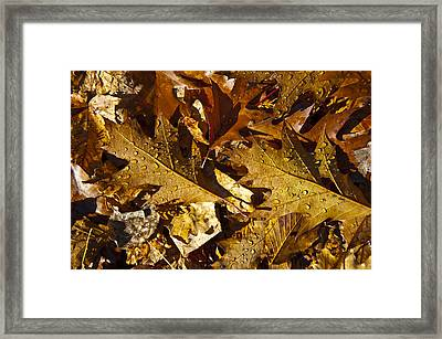 Autumn Groundcover Framed Print
