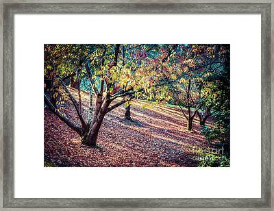 Autumn Grove Framed Print