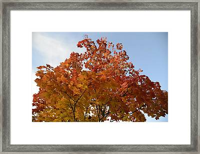 Autumn Harmony 1 Framed Print