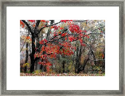 Autumn Harmony Framed Print by Michael Eingle