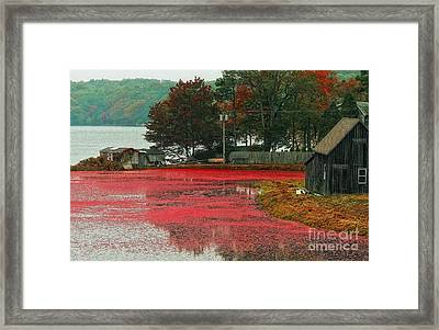 Framed Print featuring the photograph Autumn Harvest by Gina Cormier