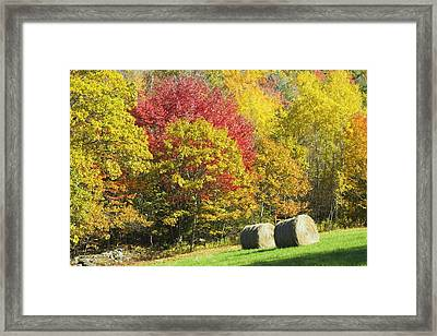 Autumn Hay Being Harvested In Maine Framed Print