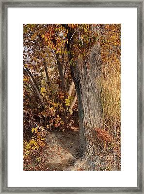 Autumn Hideaway Framed Print by Carol Groenen