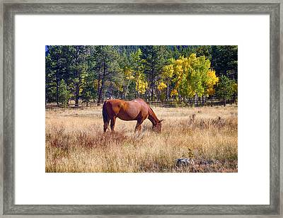 Autumn High Country Horse Grazing  Framed Print by James BO  Insogna