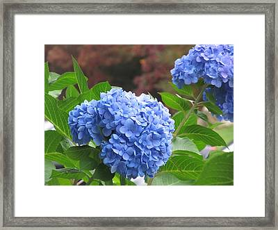 Autumn Hydrangeas Framed Print