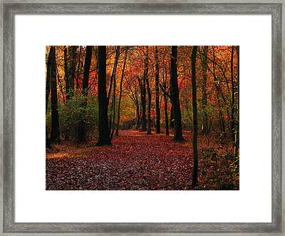 Autumn IIi Framed Print by Raymond Salani III