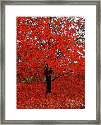 Red Tree Impressions #1 Red Framed Print by Saundra Myles