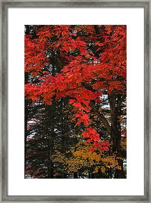 Autumn In Algonquin 3 Framed Print