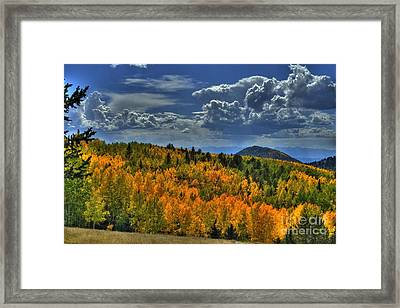 Autumn In Colorado Framed Print