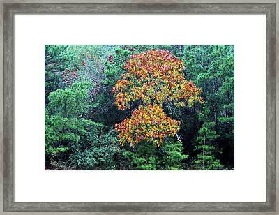 Autumn In Florida Framed Print by JC Findley