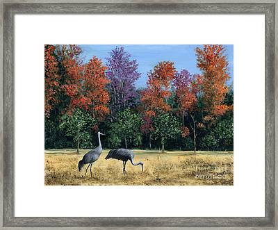 Autumn In Florida Framed Print