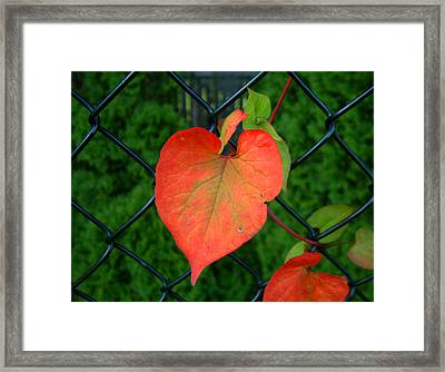 Autumn In July Framed Print by RC deWinter