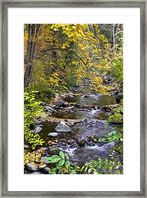 Autumn In Lithia Park Framed Print