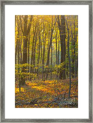 Autumn In New England Framed Print by Diane Diederich