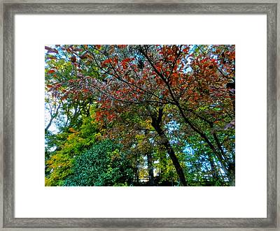 Autumn In Raleigh 009 Framed Print by Lance Vaughn