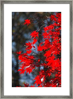 Autumn In Red Framed Print by Les Scarborough