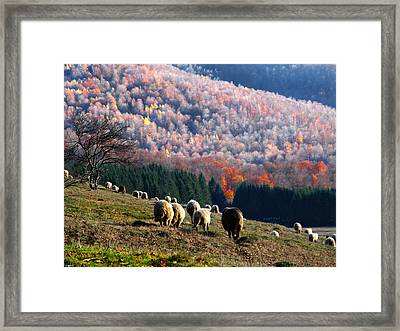Autumn In Romanian Mountains Framed Print