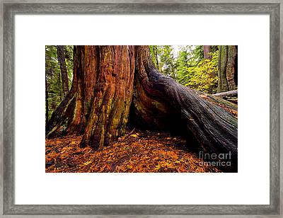 Autumn In Stanley Park 2 Framed Print