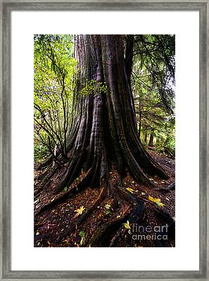 Autumn In Stanley Park 3 Framed Print