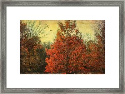 Autumn In Texas Framed Print by Joan Bertucci