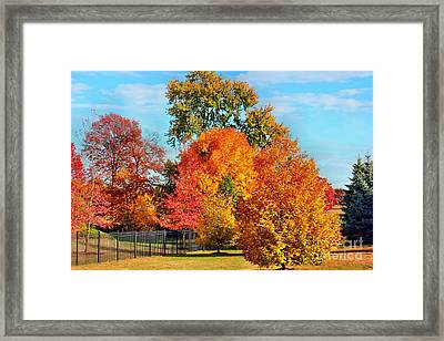 Autumn In The Air Framed Print