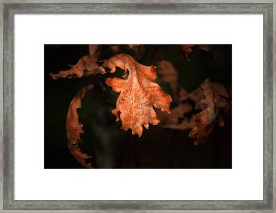 Autumn Is In The Air Framed Print by Tom Mc Nemar