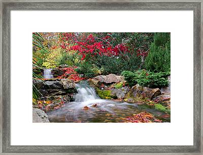 Autumn In The Botanic Gardens Framed Print by Martina Fagan