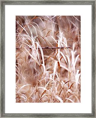 Autumn In The Country Framed Print by Angie Rea