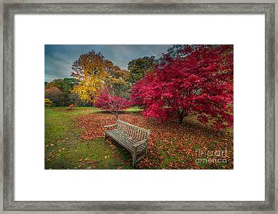 Autumn In The Park Framed Print