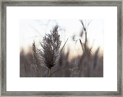 Autumn In The Tall Grass Framed Print by Andrew Pacheco