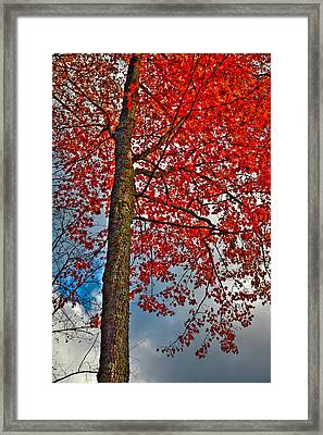 Autumn In The Trees Framed Print by David Patterson