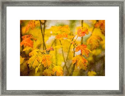 Autumn In Yellow Framed Print by Alexander Senin