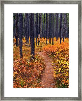 Autumn In Yellowstone Framed Print