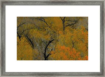 Autumn Intrigue Framed Print